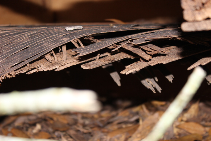 wood rot home inspections navarre gulf breeze